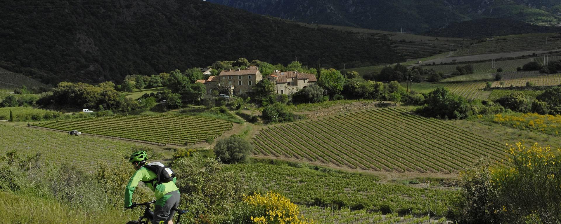 Au coeur des vignobles©OTI Minervois caroux