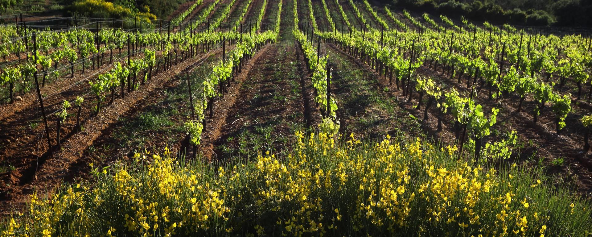 Vignobles ©G.Souche