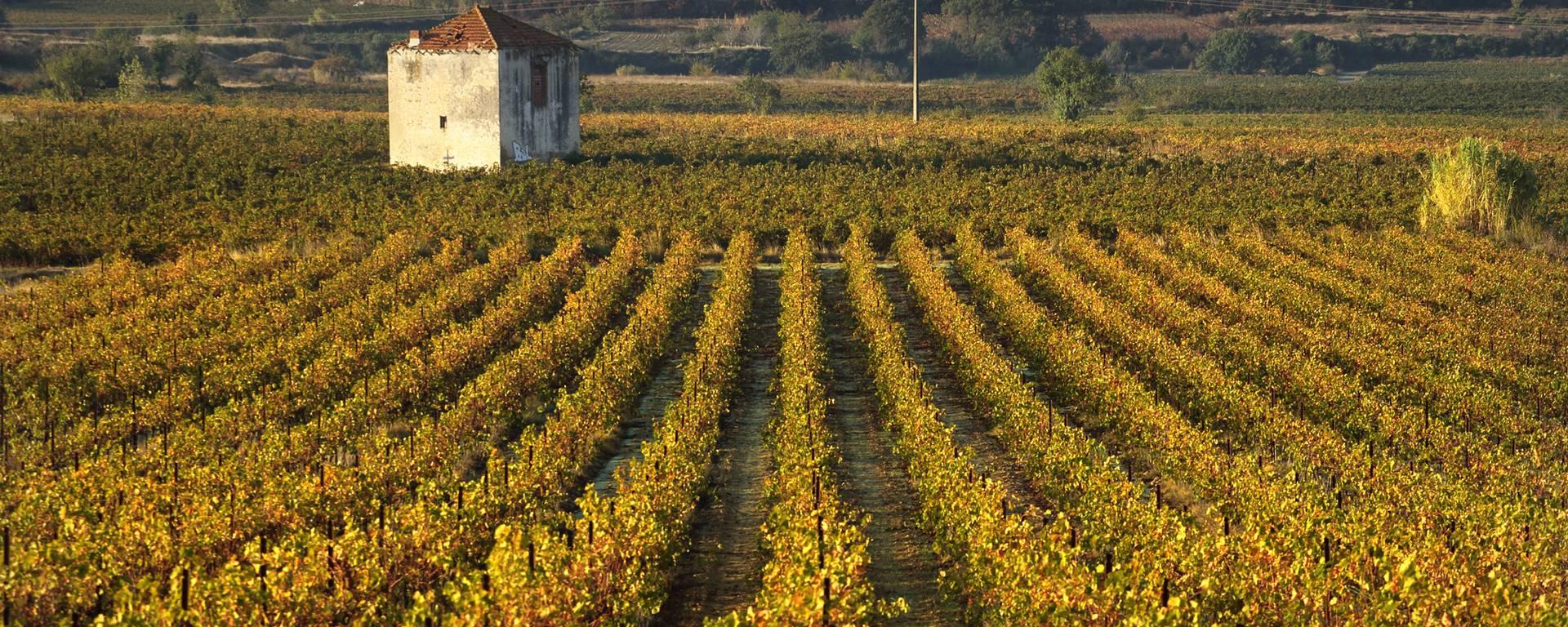 Mazet et vignes Cotes de Thongue ©G.Souche