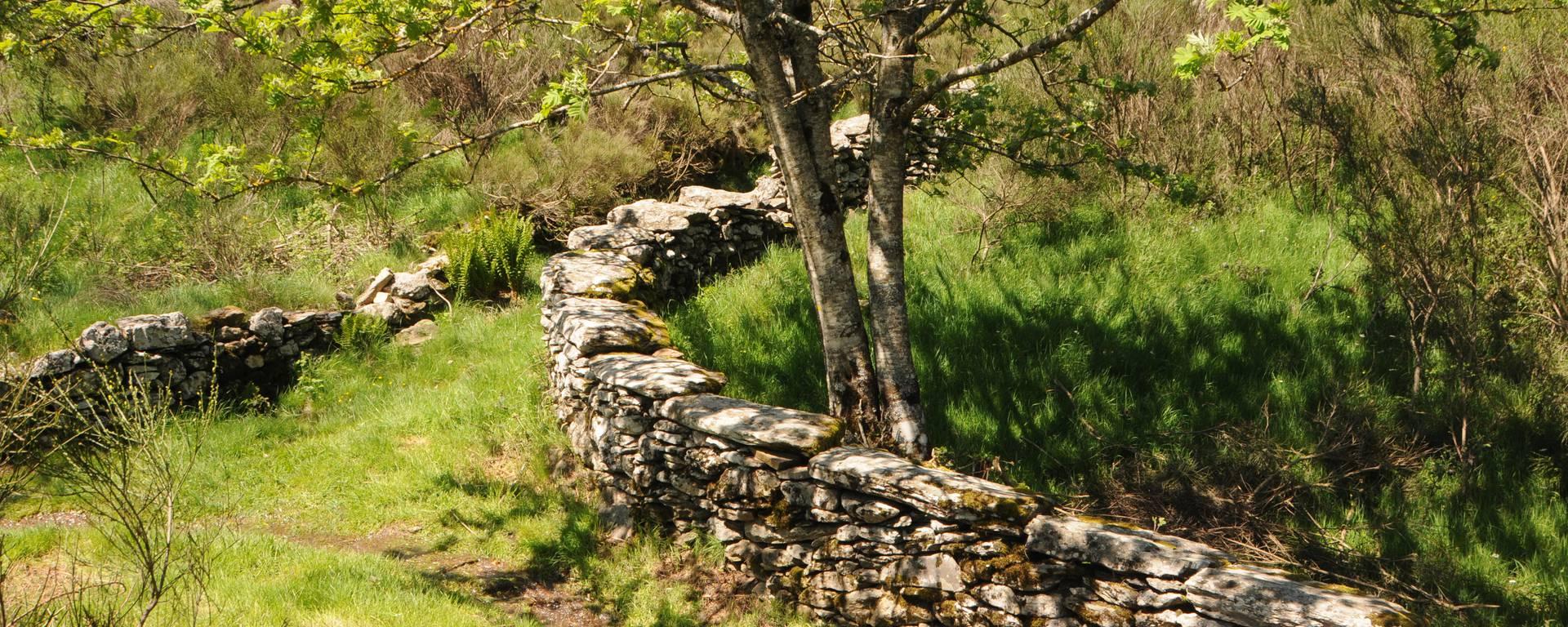 chemin enherbé mur pierre séche