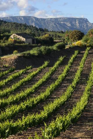 Vignobles et Caroux © Georges Souche