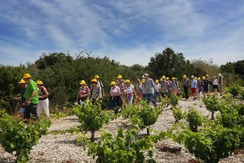 Groupe en balade dans les vignes ©Georges Souche