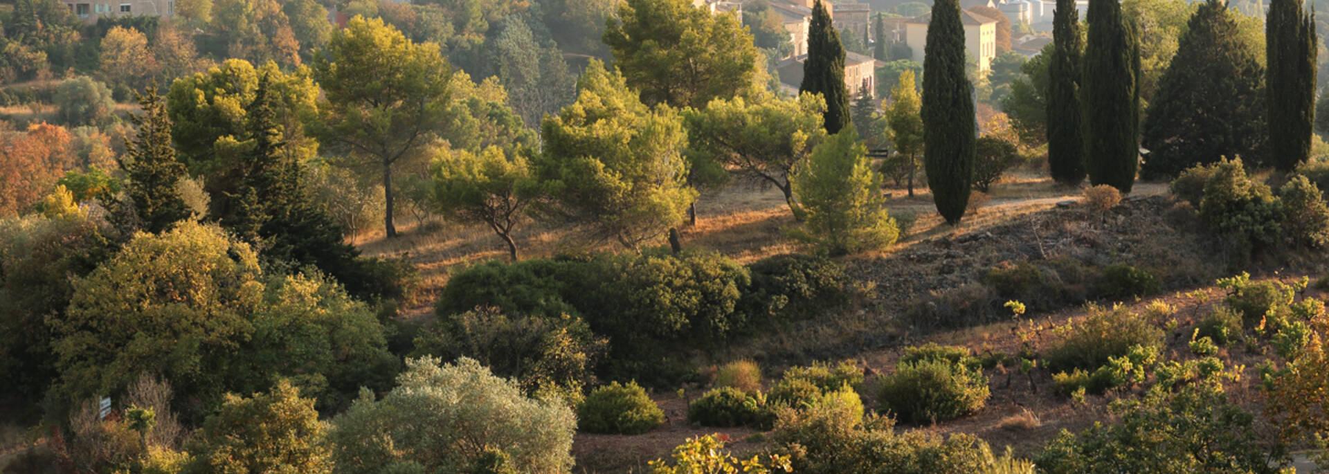 Neffies, paysage de plaine ©G.Souche