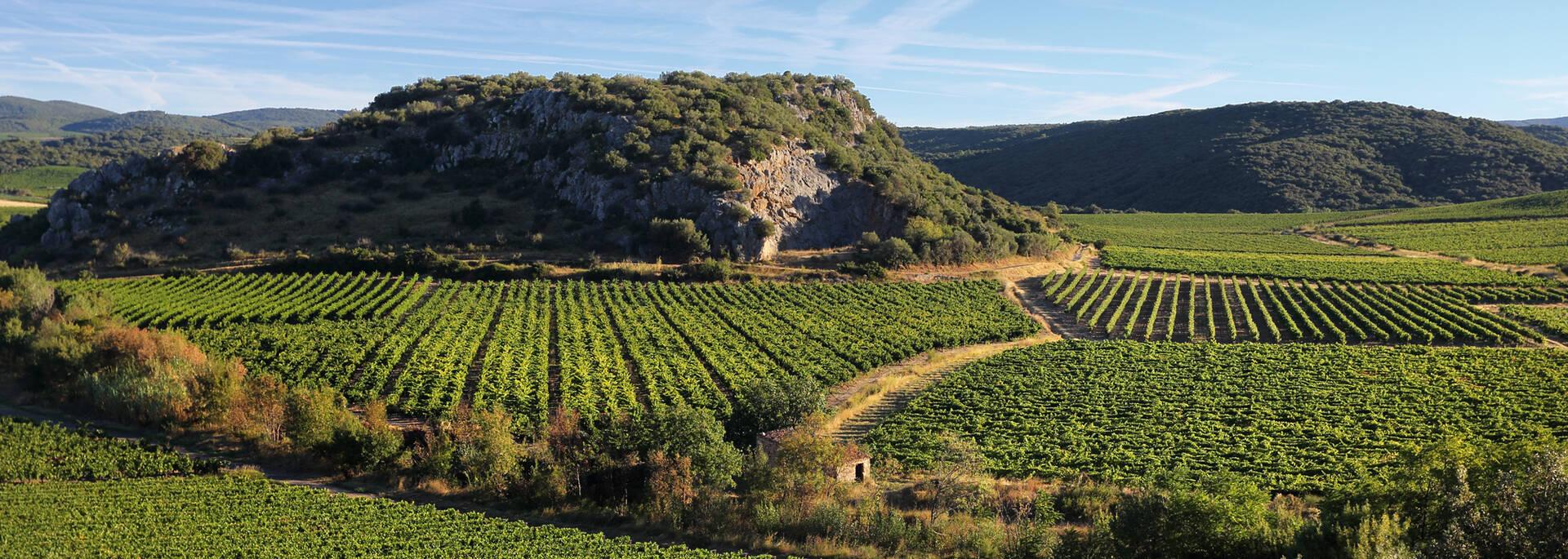 Vignoble Pays d'Art et d'Histoire Haut Languedoc et Vignobles