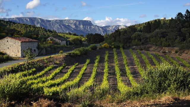 Vignobles Berlou Roquebrun ©G. Souche
