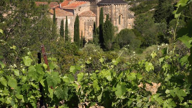 Vignes et Abbaye de Fontcaude ©G.Souche