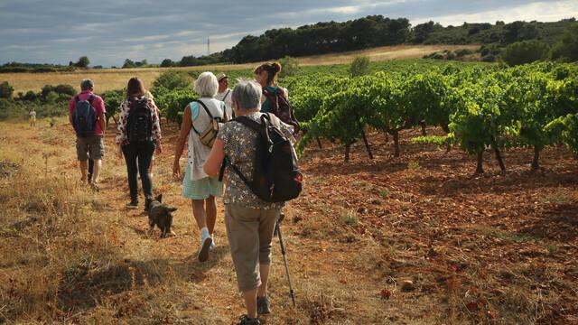 Vignobles et Découvertes ©G.Souche