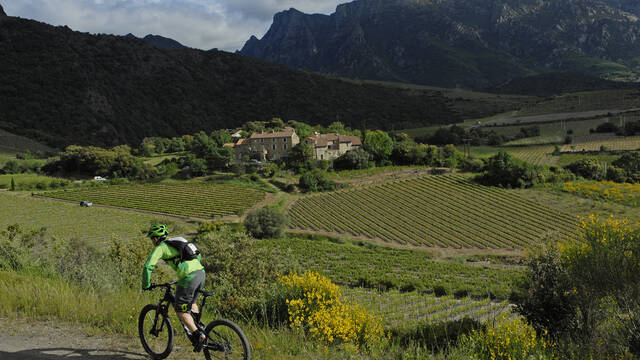 Vignes, Montagnes et VTT ©OT Minervois au Caroux
