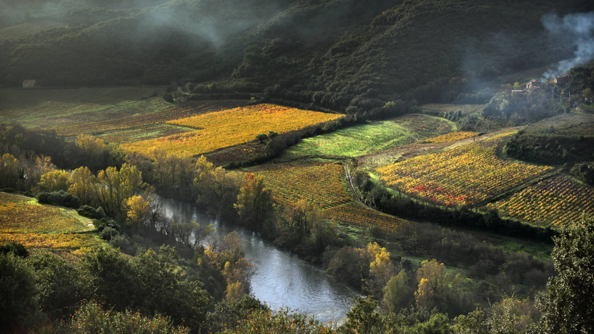 Vignes en bordure de l'Orb près de Roquebrun ©G.Souche-PaysHLV