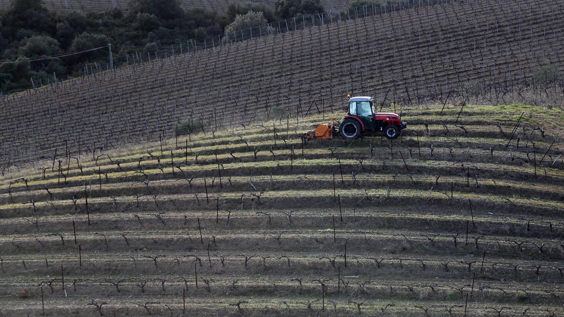 Tracteur dans les vignes de Faugères @G.Souche
