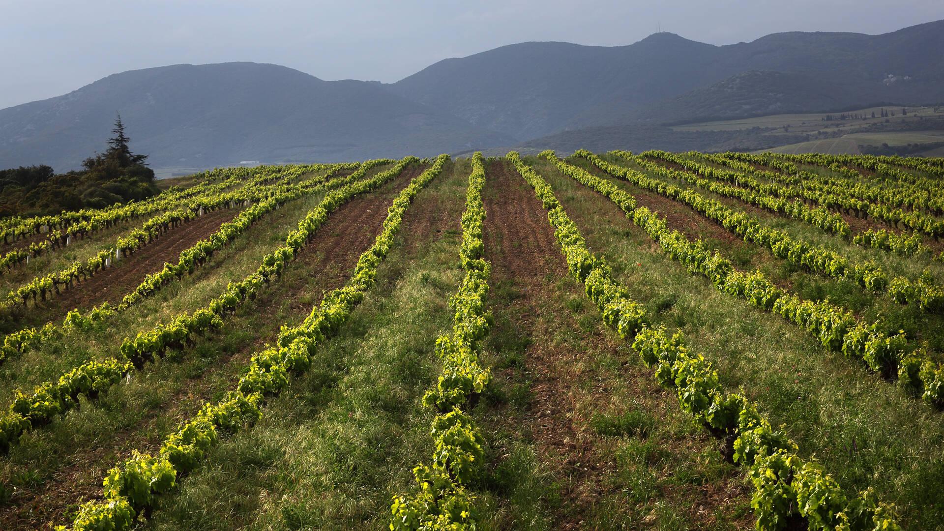 Vignobles de Faugères @G.Souche