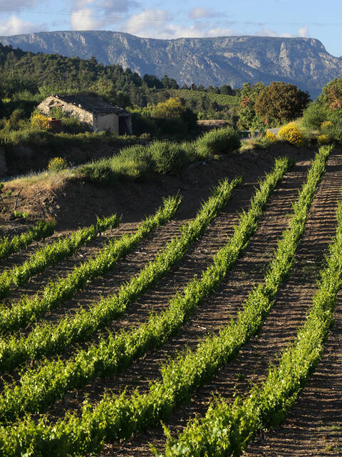 Vignobles de Berlou