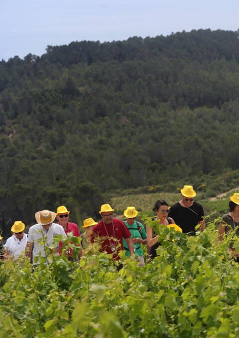 groupe de randonneurs au coeur des vignobles Minervois, Saint-Chinian, Faugères