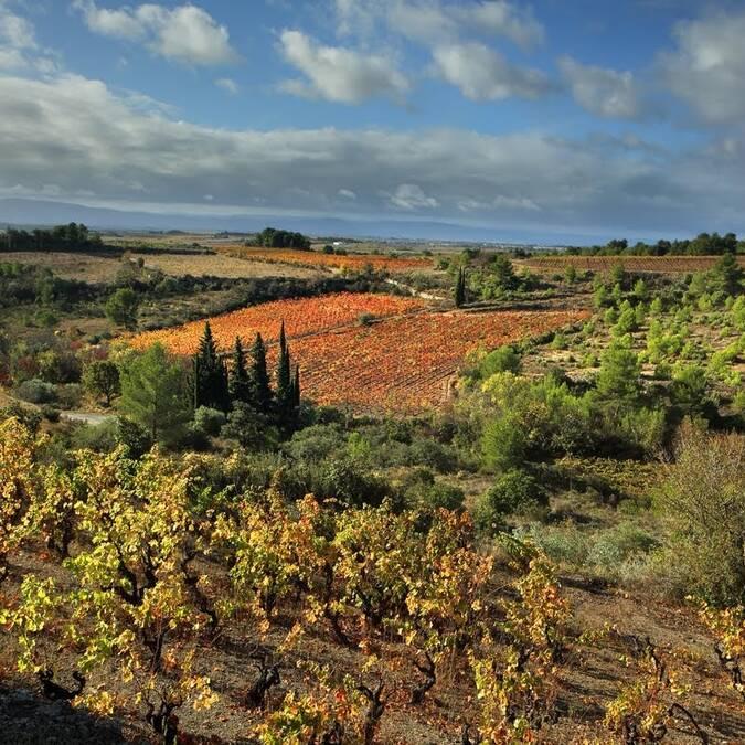 Vignoble du Minervois©G.Souche PHLV